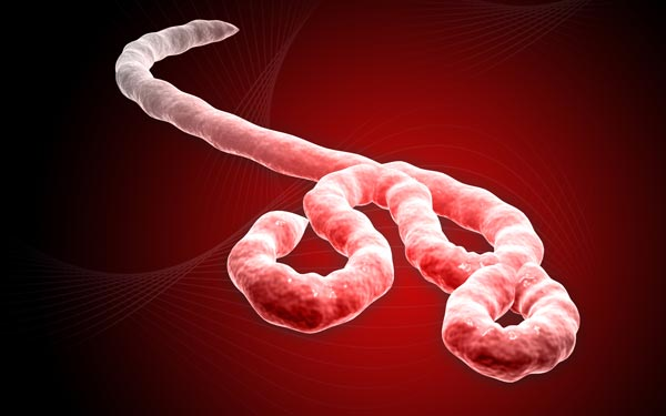 Phát hiện  một protein trọng yếu của virus Ebola nguy hiểm nhất thế giới