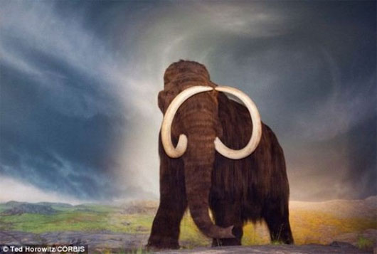 voi ma mút, voi ma mút tuyệt chủng, sao chổi va chạm trái đất, đóng băng lớn, nền văn hóa cổ đại, người clovis, kim cương nano