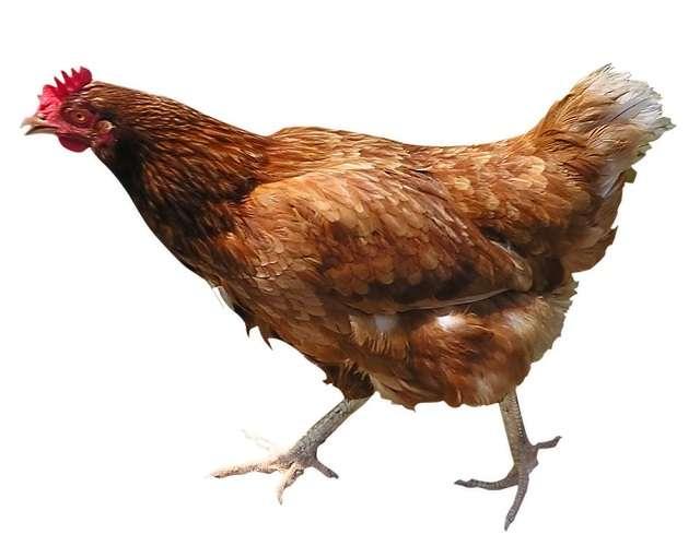 Vụ án hy hữu ở Nigeria cặp vợ chồng đâm hàng xóm chỉ vì cãi nhau về con gà
