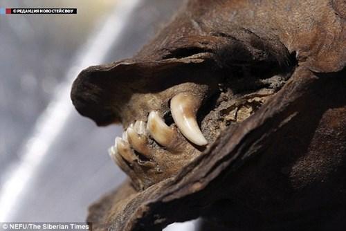 Nhiều bộ phận răng, lông, cơ quan nội tạng được bảo quản trong điều kiện tốt nhất có thể