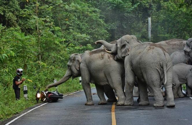 Tài xế xe phân khối lớn chắp tay xin lỗi voi