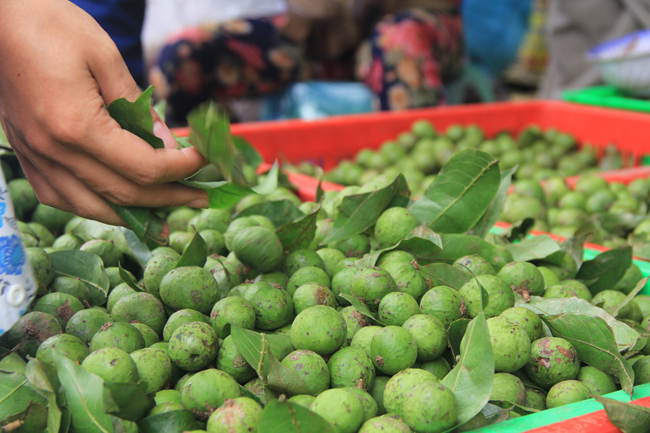 Sấu đầu mùa đắt hơn hoa quả khẩu nhập khẩu vẫn hút chị em nội trợ Hà thành