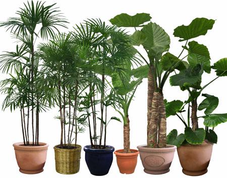 Người mệnh Thổ nên trồng cây gì trong nhà để mang lại may mắn, tài lộc