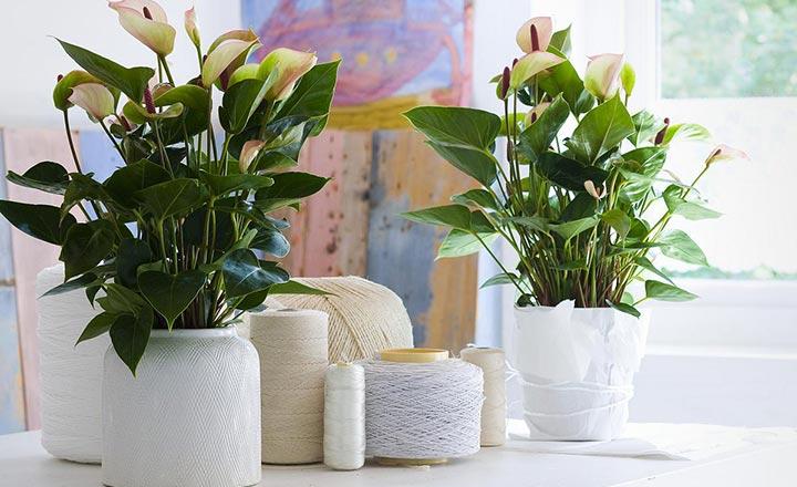 Những cây phong thủy người tuổi Tý nên trồng trong nhà để đón tài lộc