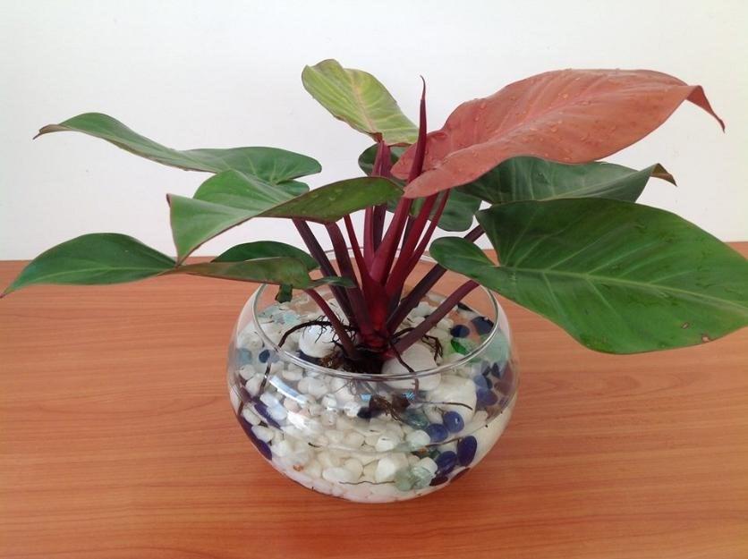 10 cây phong thủy độc, lạ chuyên gia khuyên dân Kinh doanh nên trồng trong phòng làm việc