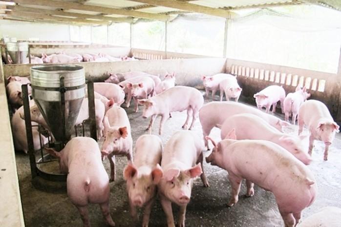 Giá cả thị trường hôm nay (18/12): Giá lợn hơi tại miền Bắc đứng vị trí số 1