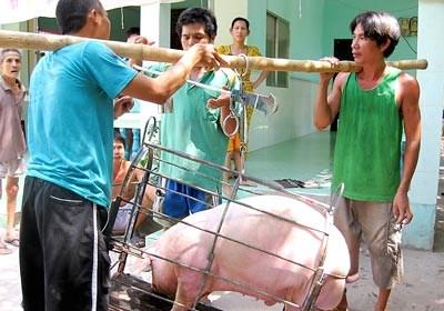 Giá cả thị trường ngày 24/1: Giá lợn hơi tại miền Bắc và miền Trung cao nhất 37.000 đồng/kg