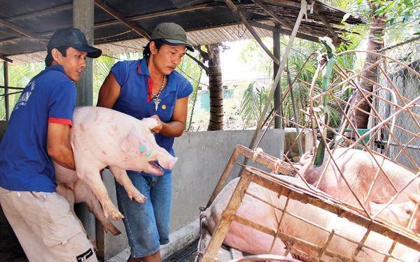 Giá cả thị trường ngày 29/1: Giá lợn hơi tại miền Bắc cao nhất 37.000 đồng/kg