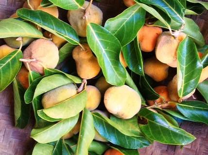 Những loại quả rẻ như cho ở nhà quê nhưng đắt đỏ ngang trái cây nhập khẩu tại Hà Nội
