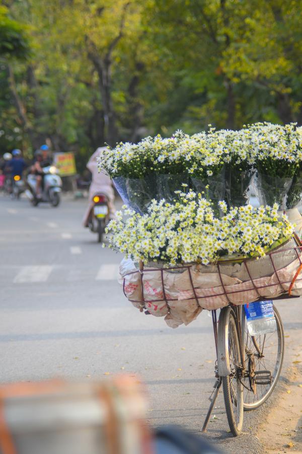 Đến hẹn lại nên, cúc họa mi gây 'sốt' thị trường hoa đầu đông