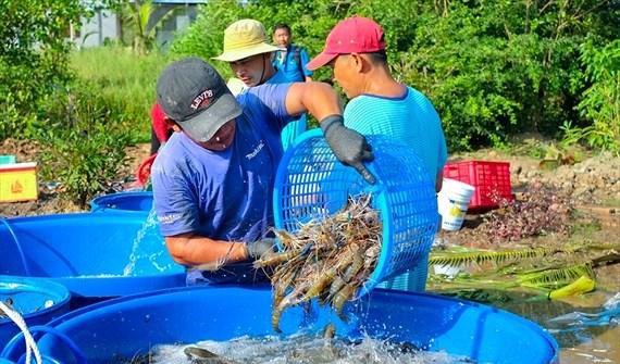 Từ 5/7, vi phạm hành chính trong lĩnh vực thủy sản bị phạt tới 1 tỷ đồng