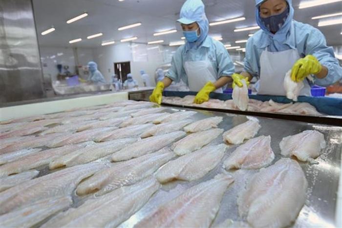 Kiểm soát tốt chất lượng, cá tra Việt tự tin mở rộng thị trường