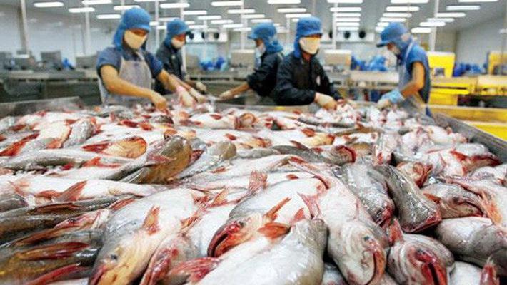 uất khẩu cá tra sẽ đạt 2,3 tỷ USD