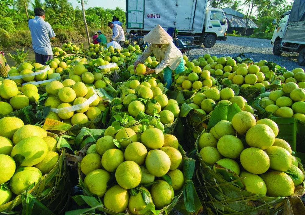 Ảnh hưởng của dịch bệnh, nhiều nông sản của Sóc Trăng cần được hỗ trợ tiêu thụ
