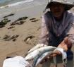 Toàn cảnh vụ cá chết ở miền Trung