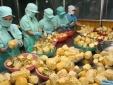 Nông lâm thủy sản Việt Nam 'được mùa' xuất khẩu