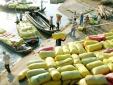 Một nửa gạo xuất khẩu mang thương hiệu quốc gia