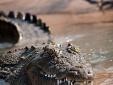 Cá sấu lên bờ ăn thịt một cậu bé 7 tuổi gây chấn động