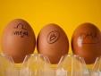 Công nghệ sản xuất trứng gà chất lượng, giàu Omega-3
