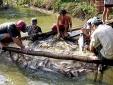 Tăng năng suất nhờ chuyển đổi vùng lúa trũng sang nuôi trồng thủy sản