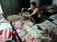 Đồng Nai: Bắt xưởng ướp thịt heo lậu cùng đá và ruồi trên đất bẩn