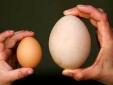 Thực hư quan niệm ăn trứng ngỗng tốt cho thai nhi?