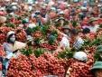 300 thương nhân Trung Quốc từng 'đổ bộ' vào đất vải Lục Ngạn
