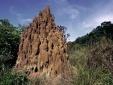 Phát hiện tổ mối khổng lồ cổ nhất thế giới