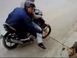 Thanh niên to cao, khỏe mạnh đi ăn trộm chó giữa ban ngày