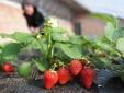 6 loại quả có thể 'ngậm' thuốc trừ sâu