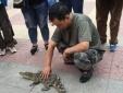 Trung Quốc: Người đàn ông gây sốc khi tự tin dắt cá sấu cưng đi dạo