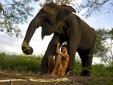 Bí mật chống ung thư của voi