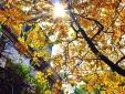 Dự báo thời tiết ngày mai 14/10: Bắc Bộ ngày nắng, không mưa