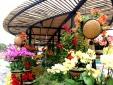 Chụp ảnh Xuân tại các đường hoa Tết rực rỡ sắc màu