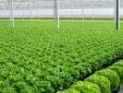 Xác định vùng nông nghiệp ứng dụng công nghệ cao để tăng năng suất