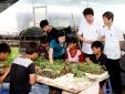 Vĩnh Phúc giải bài toán năng suất chất lượng nông nghiệp bằng công nghệ cao
