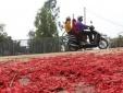 Thực hư con đường làng đỏ rực xác pháo như trải thảm ở Vĩnh Phúc