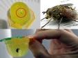Ăn phải thạch rau câu Long Hải có ruồi, con bạn sẽ mắc những bệnh gì?