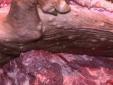 Rùng mình thịt bẩn biến hóa khôn lường qua bàn tay con người