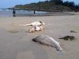 Vụ cá chết bất thường: Thủ tướng giao Bộ Công an thu thập chứng cứ