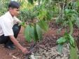 Vườn cây xanh ngát trong nắng hạn nhờ áp dụng mô hình tưới tiết kiệm