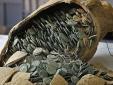 Choáng váng phát hiện kho báu 600 kg tiền xu ở công viên Tây Ban Nha