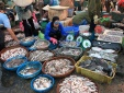 Hà Tĩnh: Cá tại chợ có hàm lượng kim loại nặng 'an toàn'