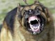 Liên tiếp thất thủ, khủng bố IS điên cuồng thả chó ăn thịt 'bại tướng'