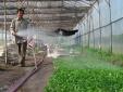 Vĩnh Phúc: Ứng dụng công nghệ nâng cao năng suất nông nghiệp