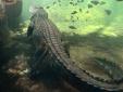 Australia: Kinh hoàng nữ du khách bị cá sấu lôi đi khi tắm biển