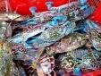 Cẩn thận với ghẹ biển giá rẻ 'giật mình' tại TP. HCM