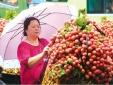 Bắt đầu Tuần lễ vải thiều Lục Ngạn - Bắc Giang tại Hà Nội 2016