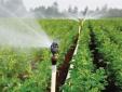 Gia Lai tăng năng suất cây trồng bằng hệ thống béc phun
