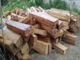 Công bố chính thức diễn biến vụ án phá rừng pơmu ở Quảng Nam